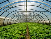 精良的连栋温室大棚供应――光伏太阳能温室设计