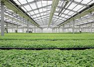 蔬菜温室大棚建造商|想建连栋温室大棚就到鑫博温室