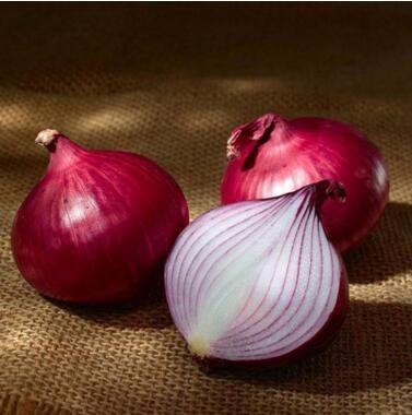 优惠的红皮洋葱种子|四川优良红皮洋葱种子供应商