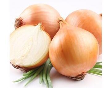 黃皮洋蔥種子供貨廠家-買黃皮洋蔥種子選哪家好