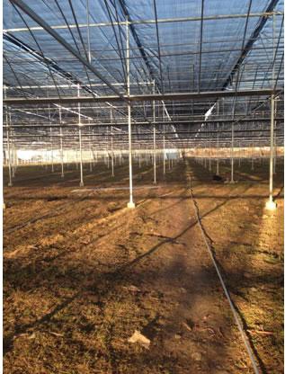 专业靠谱的温室大棚推荐 优质的温室大棚建造