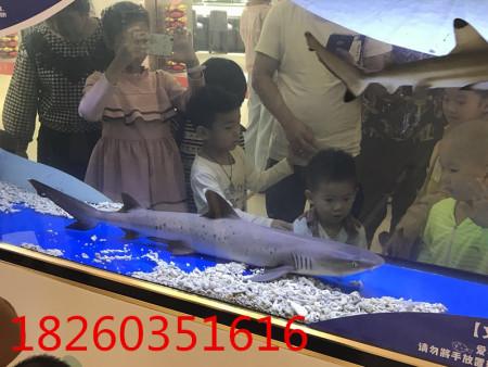 海洋展海洋展活动,想找口碑好的海洋生物展,就来高峰展览