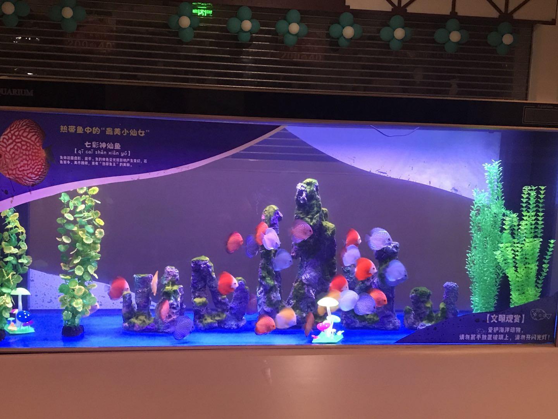受歡迎的海洋生物展出自高峰展覽 專業的海洋生物展