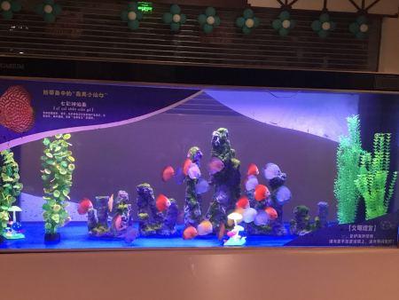 海洋展,正規的海洋生物展出自高峰展覽