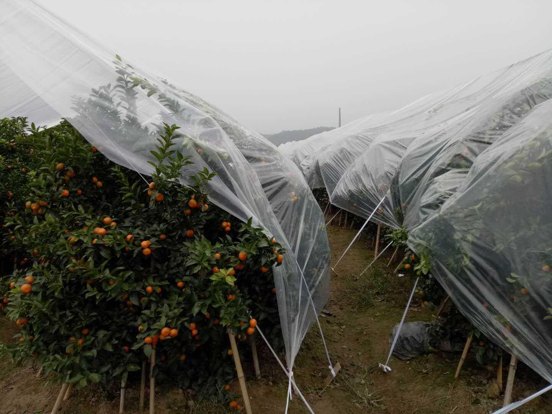 砂糖橘防冻膜-品质好的砂糖橘防寒膜生产厂