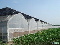 连栋薄膜温室建造找哪家 厂家直销的连栋薄膜温室