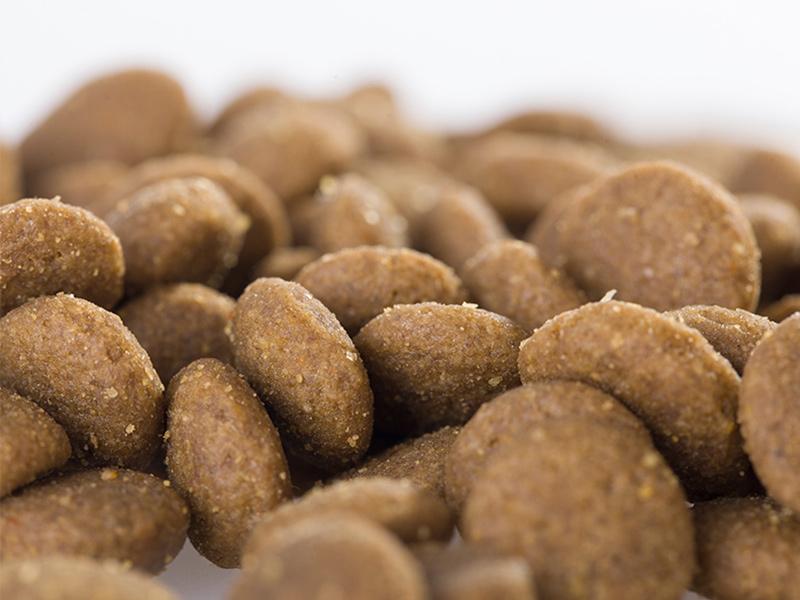 北京宠物罐头-品质好的宠物食品批售