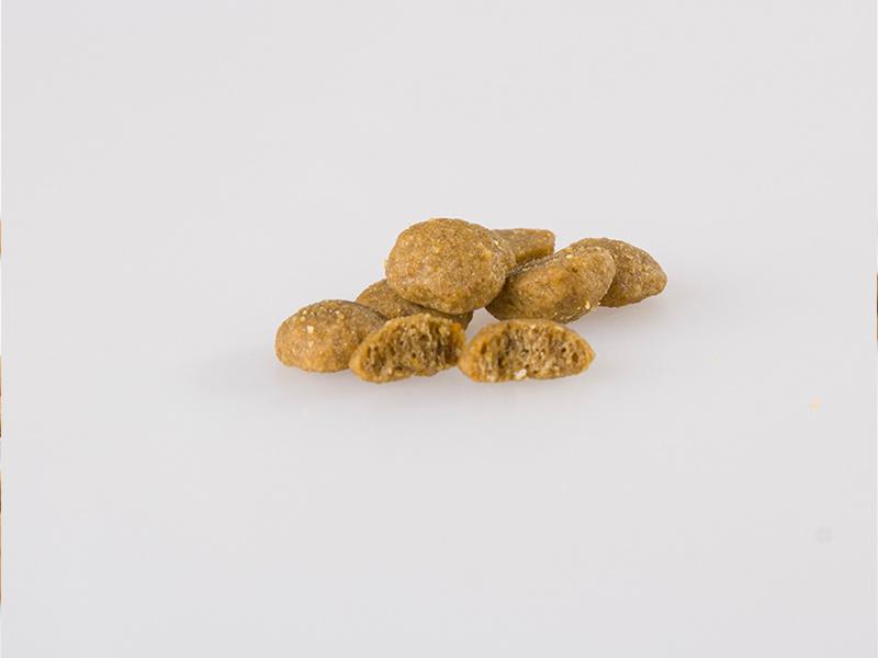 秦皇島狗糧|供應山東銷量好的狗糧