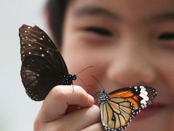 想找有创意的蝴蝶展览,就来高峰展览_蝴蝶展览价格