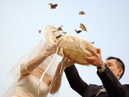 诚信的蝴蝶展——徐州专业的蝴蝶展览