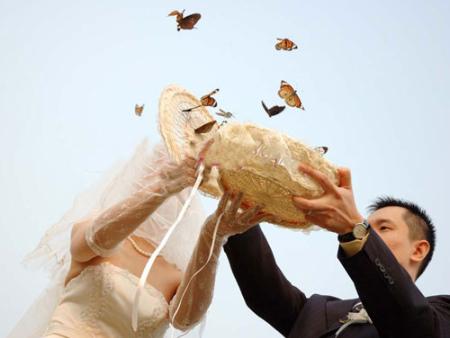 香港蝴蝶展_服務周到的蝴蝶展覽推薦