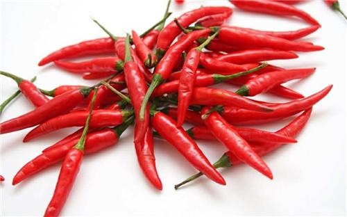 辣椒哪里有供应|贵州辣椒价格