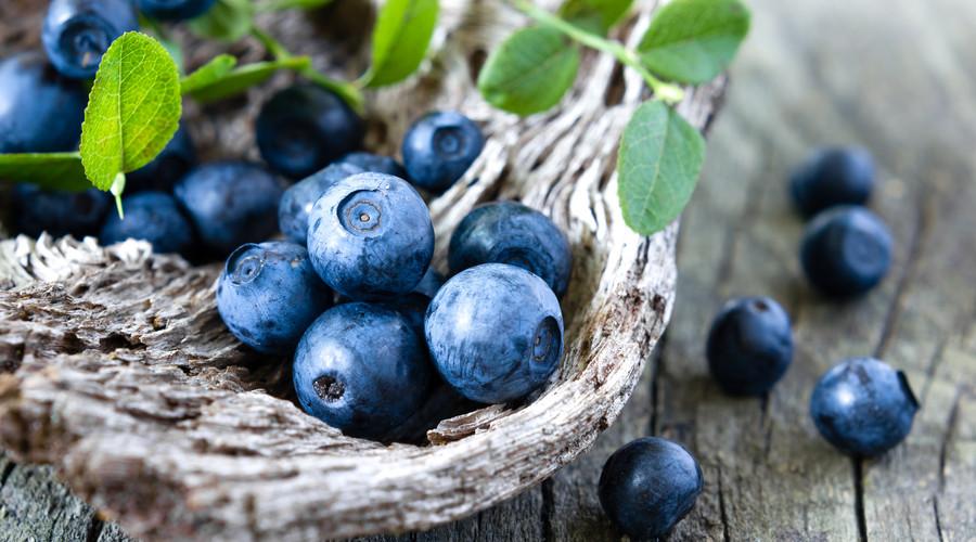 四川组培蓝莓苗-供应辽宁口碑好的组培蓝莓苗