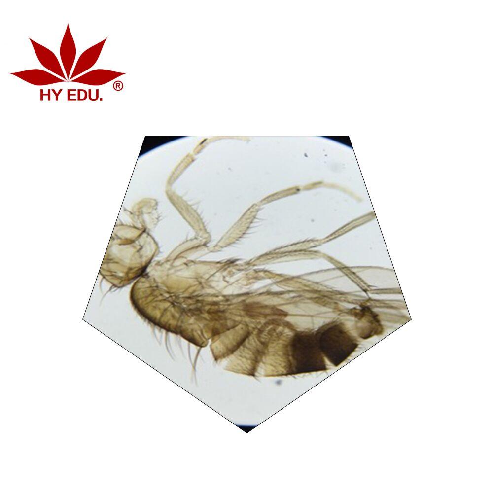 实惠的昆虫生物切片红叶教学仪器供应|昆虫生物切片价格