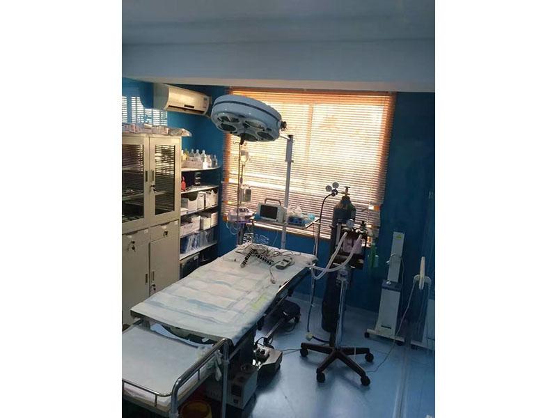 犬猫骨折怎么办|有品质的宠物医院就是兰州兰领医院