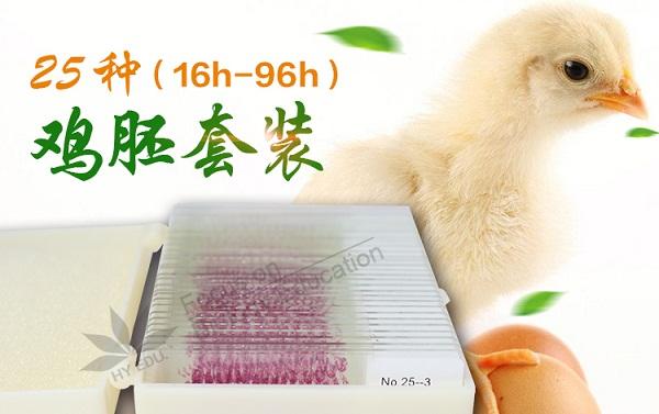 太原哺乳类胚胎切片|鸡胚切片哪家买比较划算