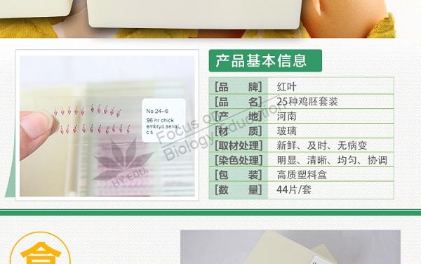 出售河南实惠的鸡胚切片 江苏哺乳类胚胎切片