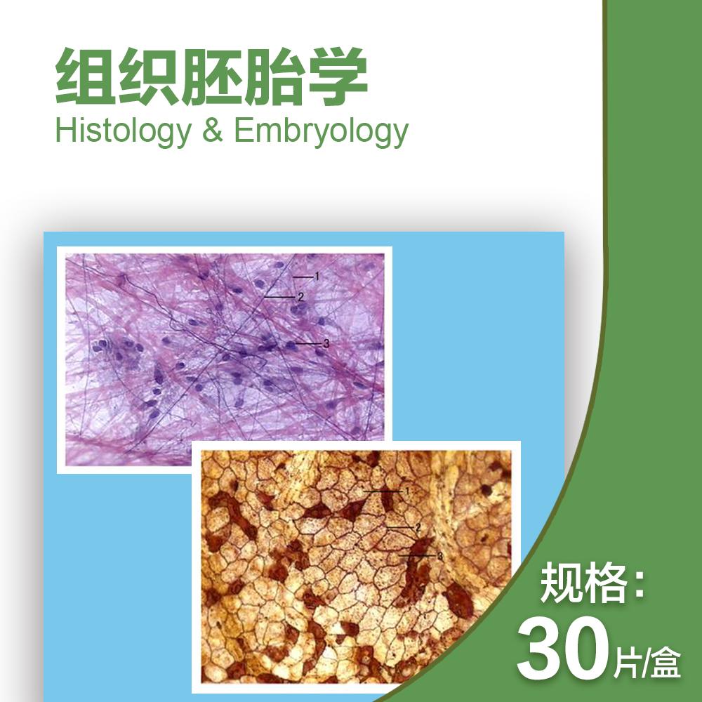 组织胚胎切片