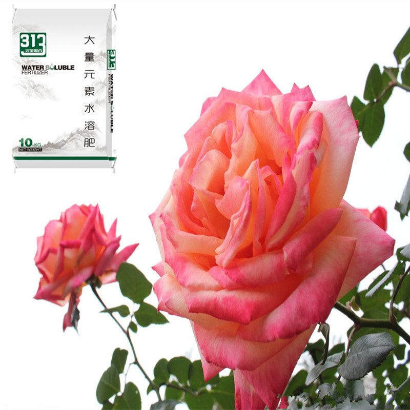 高钾肥通用型花卉水溶肥@大量元素水溶肥厂&家庭园艺花卉水溶肥