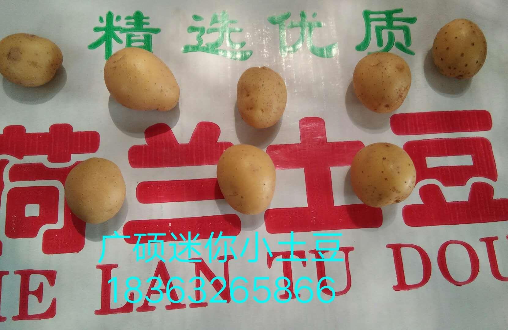 迷你小土豆上哪买比较实惠 促销迷你小土豆