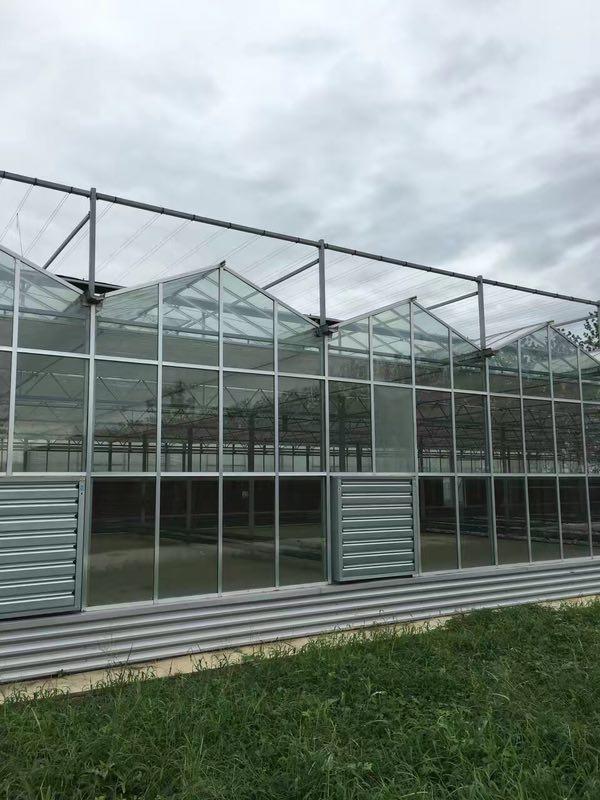 广元玻璃大棚-简易大棚造价
