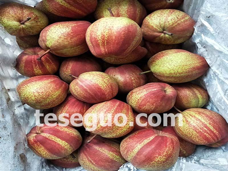 河北红酥梨-专业红酥梨市场价格情况
