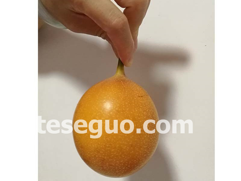 齐乐果蔬专业供应黄金百香果——河北黄金百香果品牌