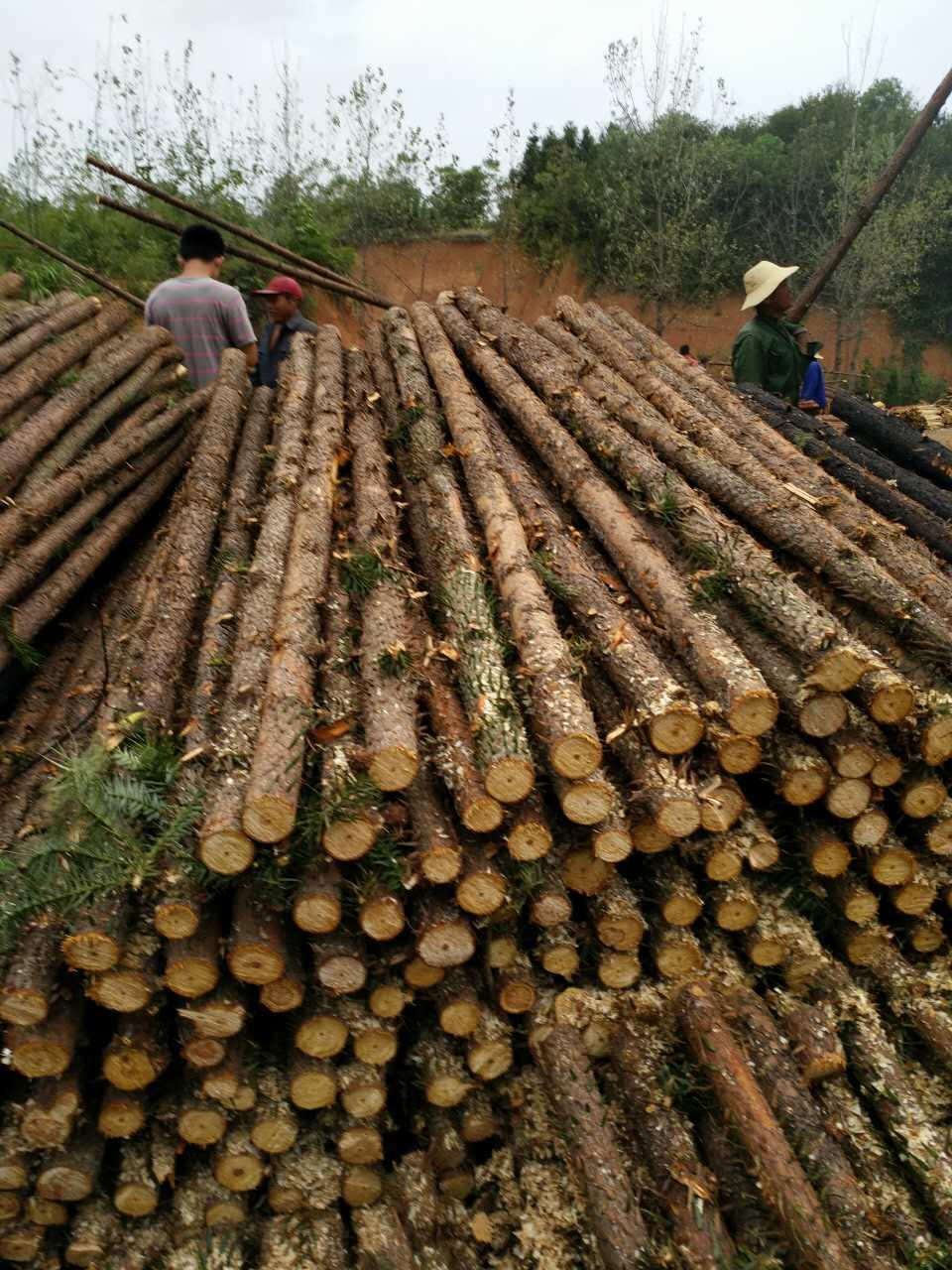 性价比高的杉木杆推荐  ,北京杉木杆