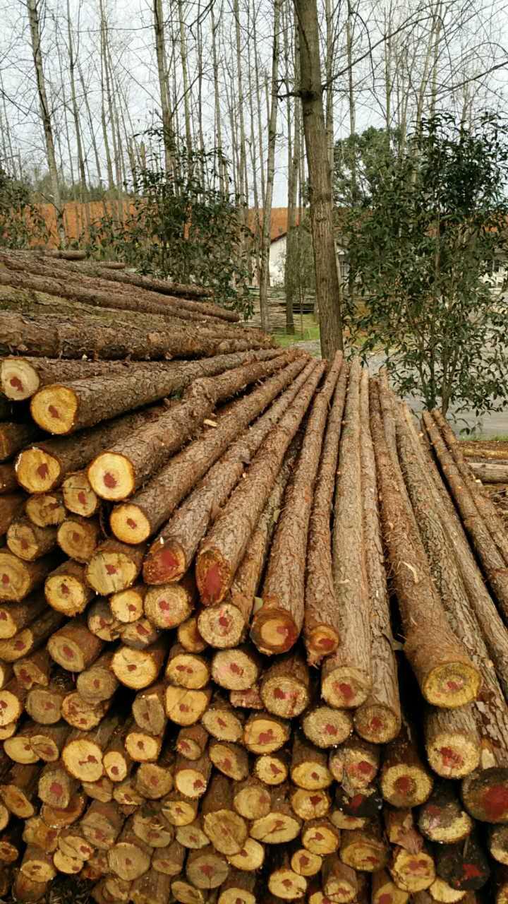 咸宁杉木杆价格怎么样-杉木杆供应价格