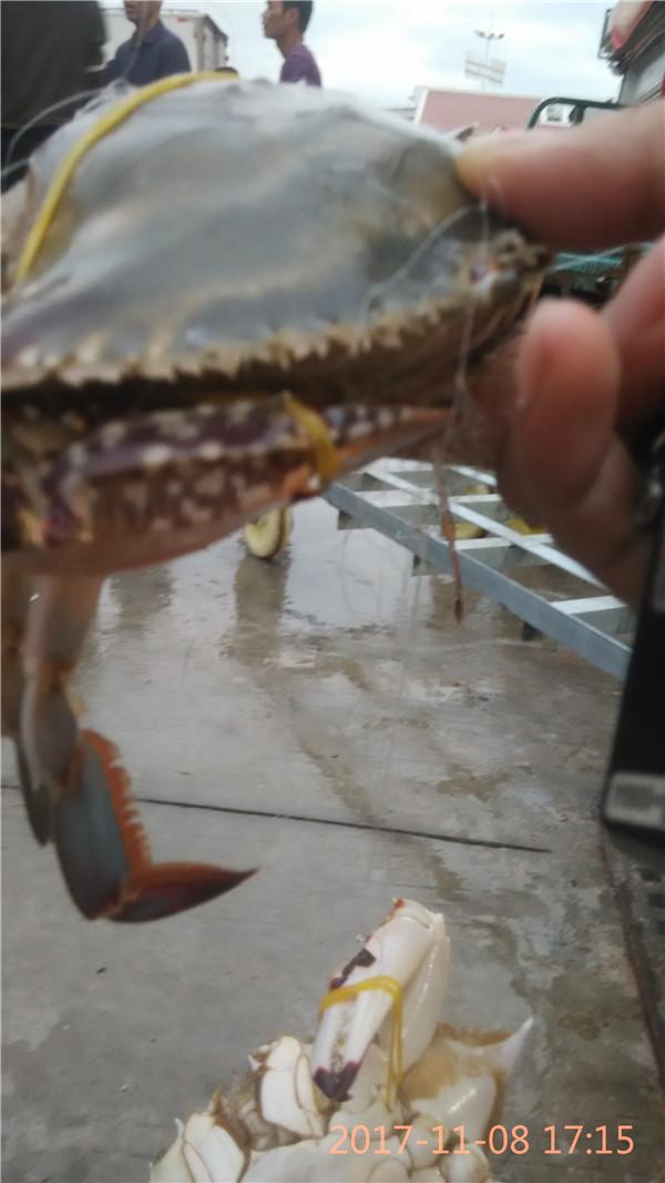 福建销量好的冬蟹是什么蟹供应|冬蟹