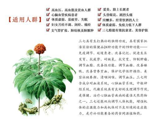 旭康糖尿病研究所_专业云南文山三七粉供应商——三七粉代理加盟