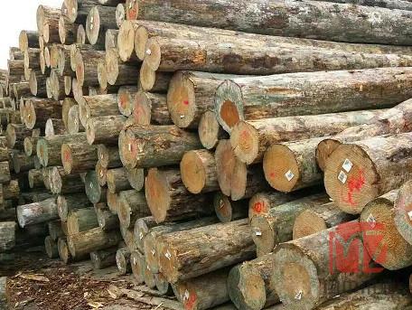 哪儿有卖品质高的建筑木材-南宁大型木材加工厂