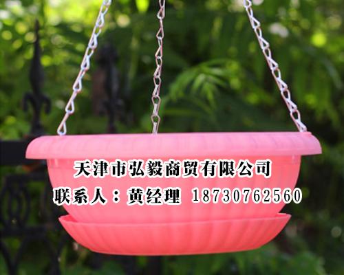 供应沧州不错的绿萝盆 绿萝盆多少钱