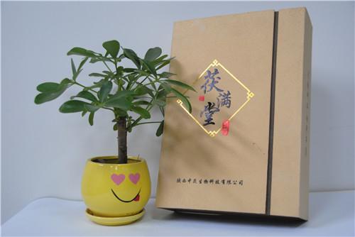 优质特产包装盒专业供应——岚皋特产包装盒