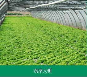 蔬菜高温大棚建造厂家――热镀锌果蔬大棚建设