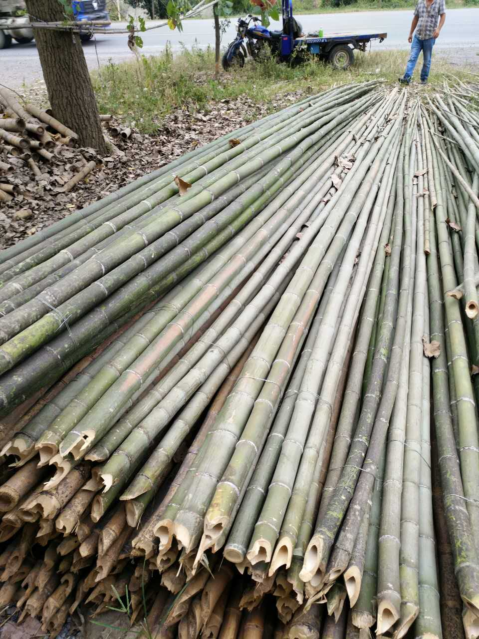哪里有供应杉木杆,竹木杆产品价格