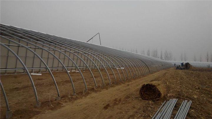 哪里有提供温室大棚_优质的温室大棚