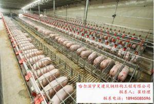 哈尔滨华宸绿建专业提供钢结构猪牛羊舍|长春钢结构猪牛羊舍供应