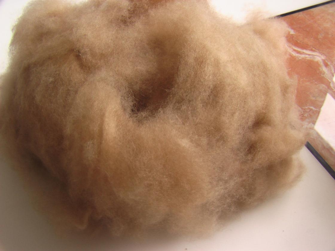 紫山羊绒低价出售