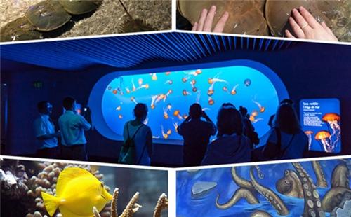 江苏海狮表演-有品质的科普展览出自帝幽