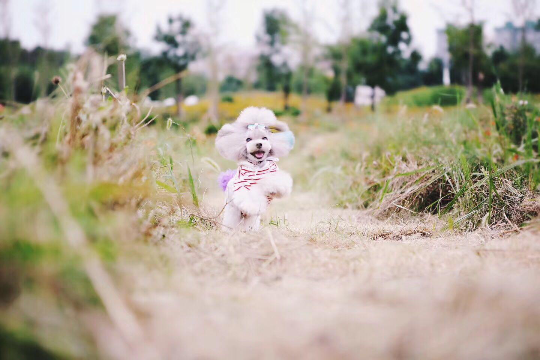 寿光宠物医院-潍坊可信赖的宠物美容