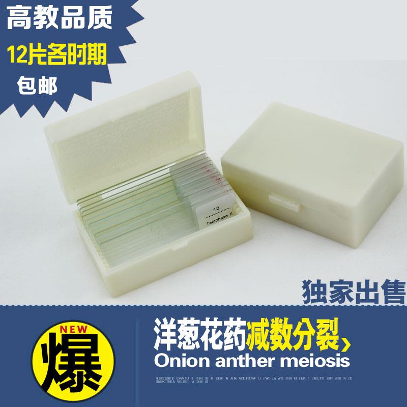 洋葱花药减数分裂显微镜标本玻片