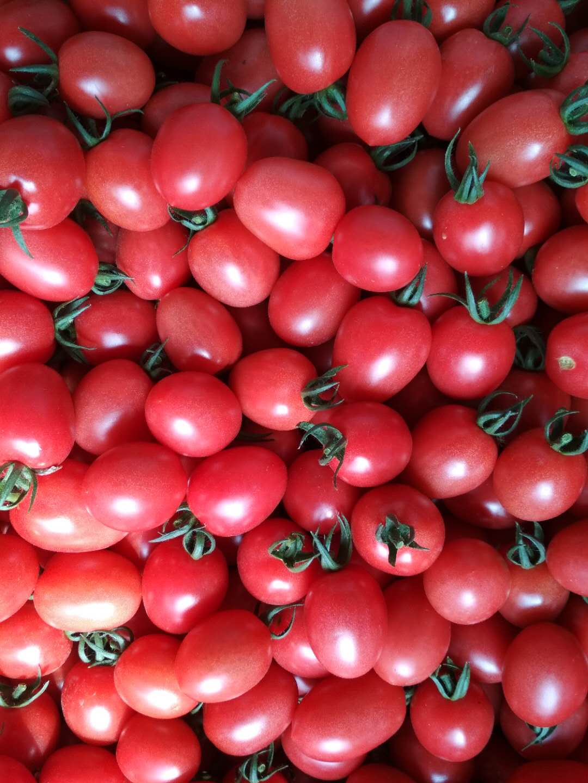 山东规模大的圣女果生产基地,哪里有山东蔬菜批发