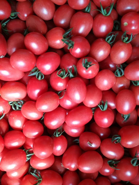 出口山东蔬菜批发——想买新品圣女果,就到山东万泰蔬菜