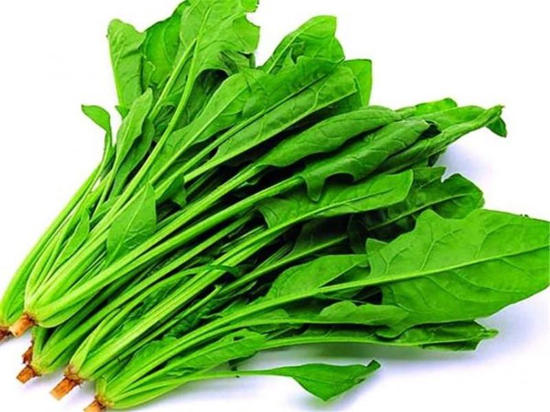东莞方格绿农产品配送服务您身边靠谱的蔬菜配送公司,专业蔬菜配