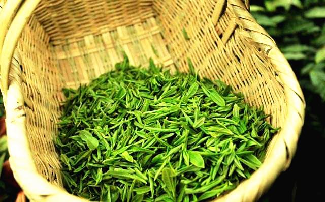 新光茶叶供应价格优惠的都匀毛尖——怎么挑选都匀毛尖