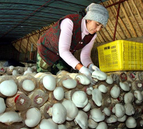 划算的食用菌供应-有机农产品