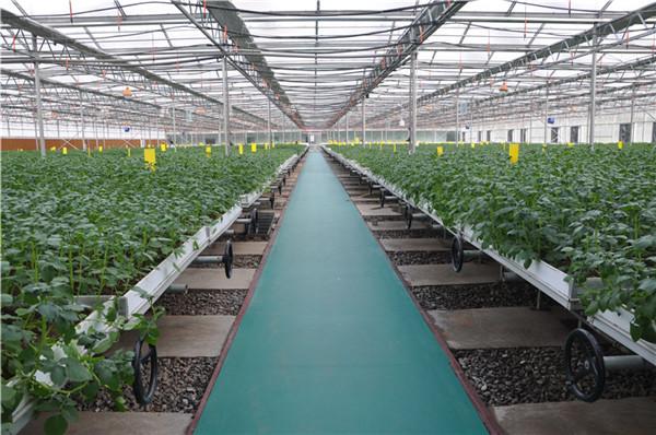 供应土豆种子_蒲县昕源种业供应物超所值的土豆种子