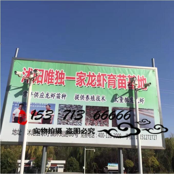 宿迁优质的小龙虾种苗提供商|安徽龙虾批发市场