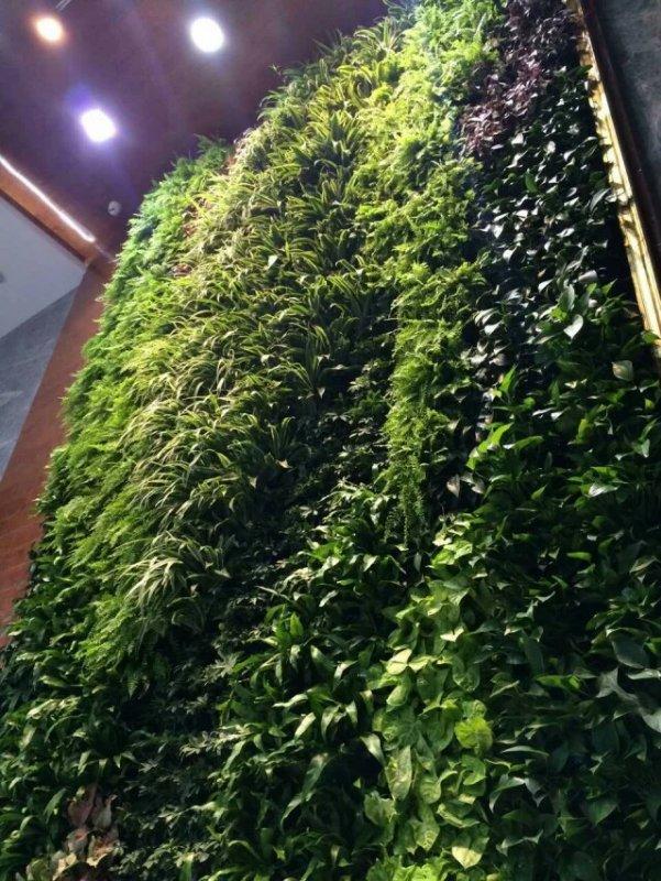 立体绿化滴灌系统-来盛凯园林绿化有限公司-买超值的立体绿化植物